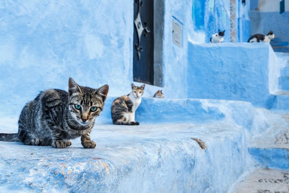 I gatti di Chefchaouen