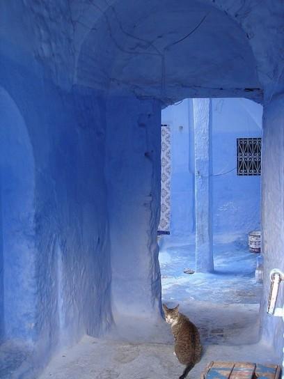 i-gatti-della-citta-blu