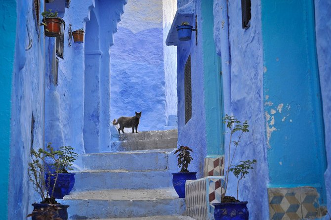 xblue-streets-of-chefchaouen-morocco-3.jpg.pagespeed.ic.9C8jAcu9av
