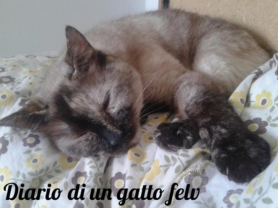 Il sonno del gatto: curiosità e consigli per un sereno riposo (per tutti!)