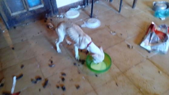 Una delle cagnoline maltrattate - Fonte foto: La Nazione
