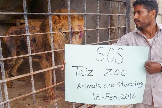 La situazione dello zoo di Taiz a Febbraio 2016, prima dell'intervento della Sos Zoo and Bears Rescue