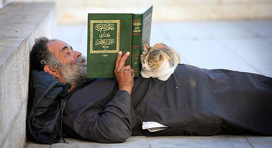 Il gatto nella cultura islamica: curiosità, leggende ed un simpatico video