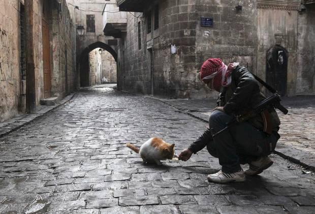 I gatti dei ribelli siriani (guarda la galleria fotografica)
