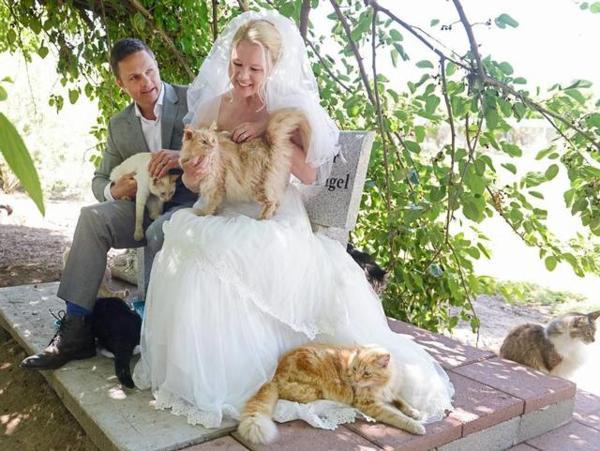 Gatti e matrimonio: sposi davanti a 1100 gatti!