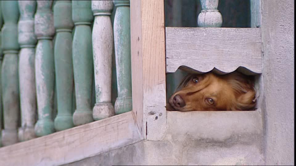Pensieri di un cane chiuso sul balcone, (racconto)