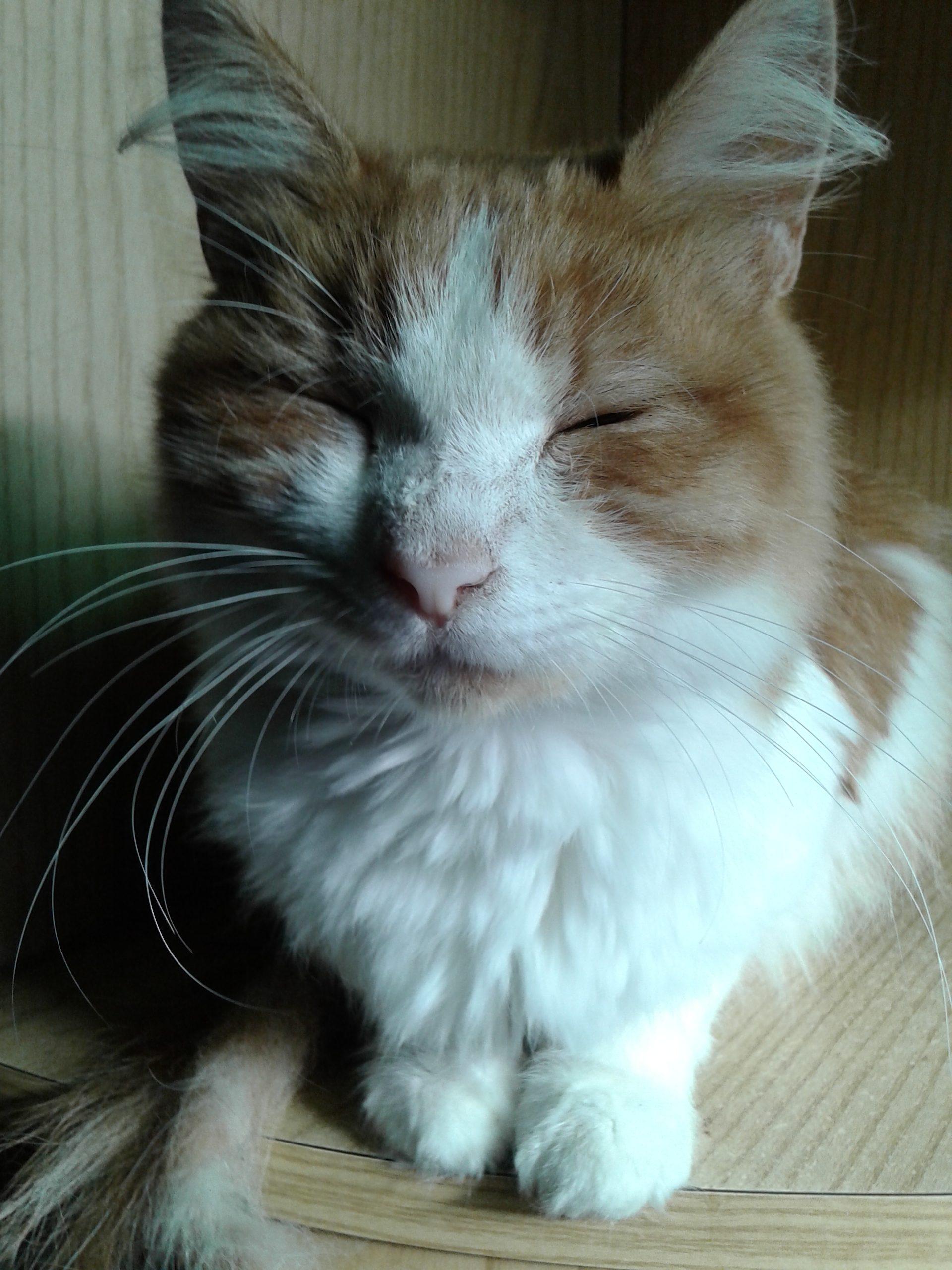 Allergia al gatto: consigli per tenerla sotto controllo e non abbandonarlo