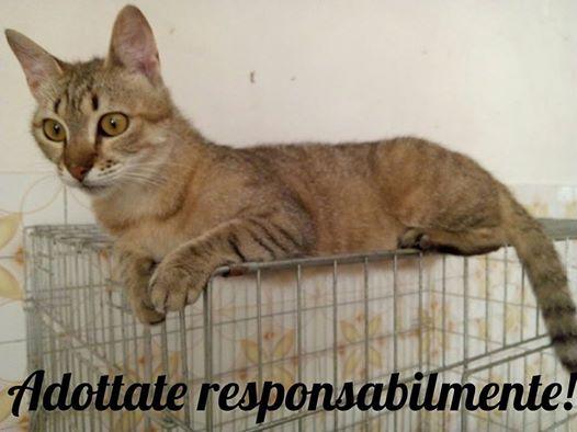 Allergia al pelo del gatto: adozioni ed abbandoni (pensieri personali)