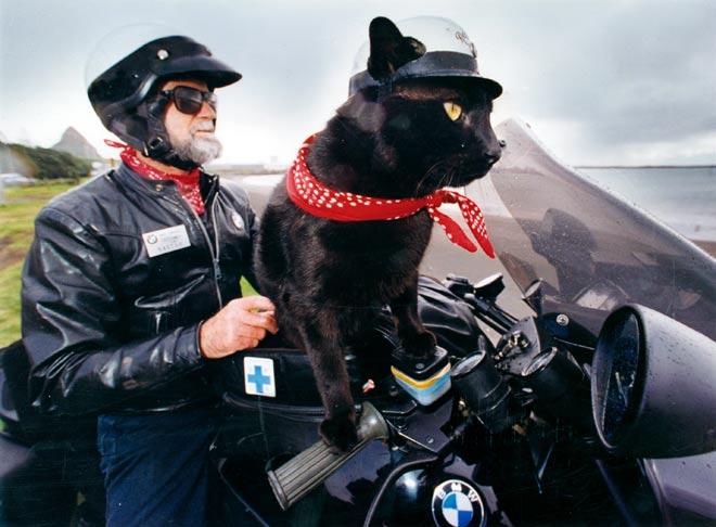Rastus, il gatto motociclista: leggi la sua storia e guarda foto e video!