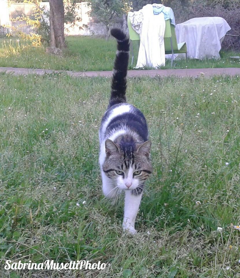Il Gatto Soriano: caratteristiche e curiosità del gatto per eccellenza
