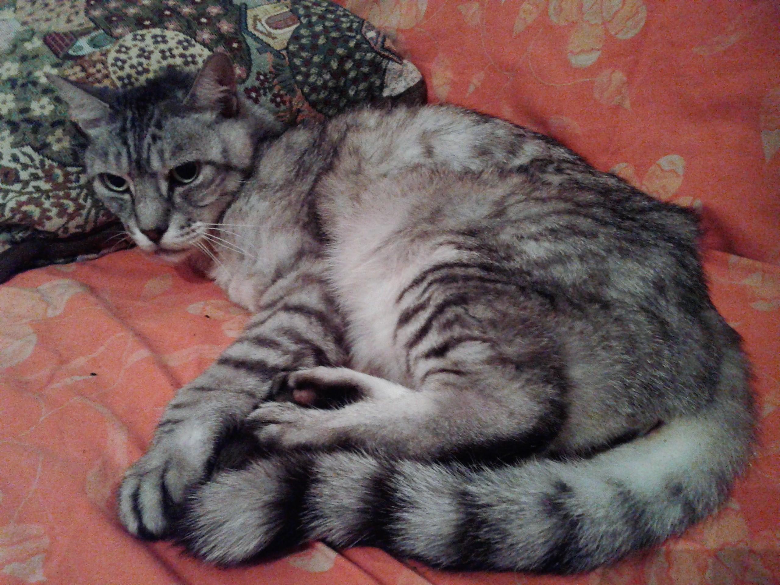 FIV: il virus dell' immunodeFicienza felina