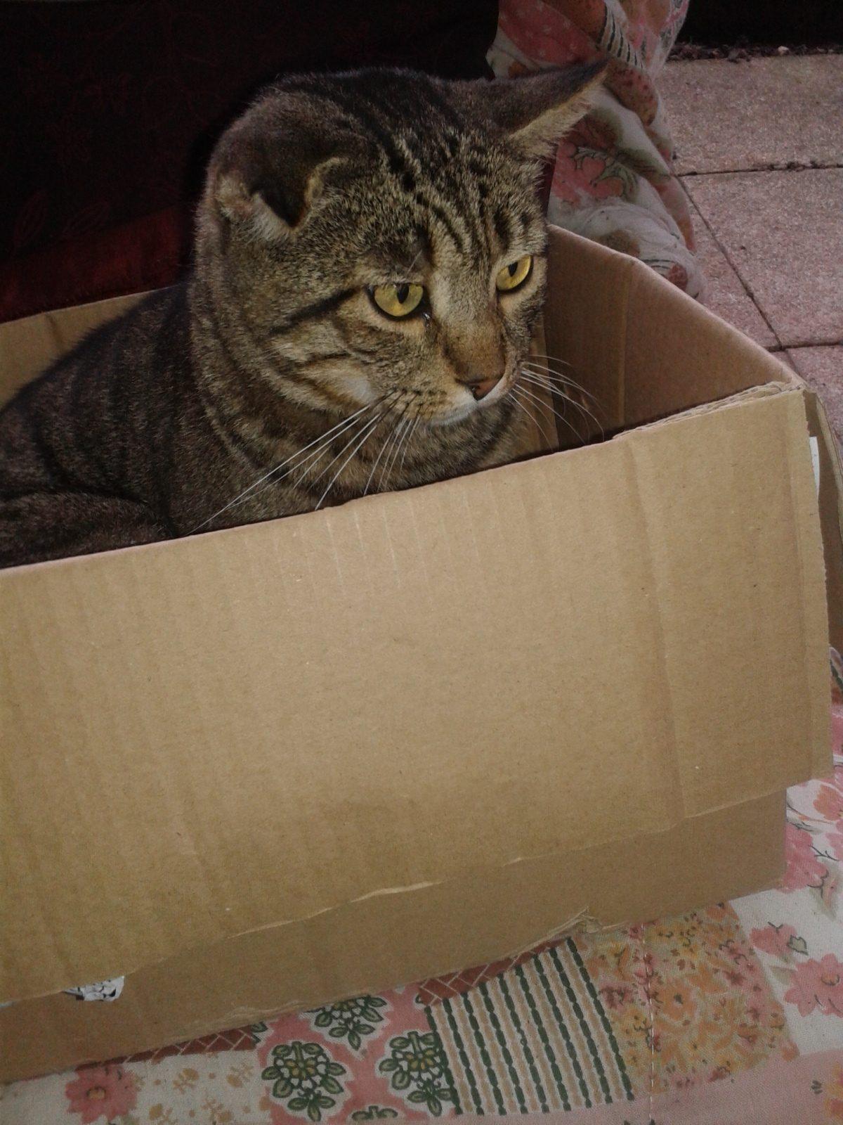 FIV e FELV a confronto: le differenze tra le due principali malattie infettive del gatto