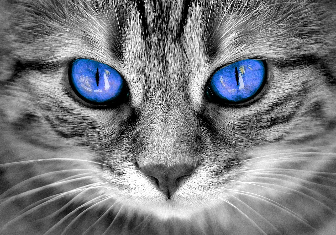"""Test:""""Quanto è magico il tuo gatto?"""""""