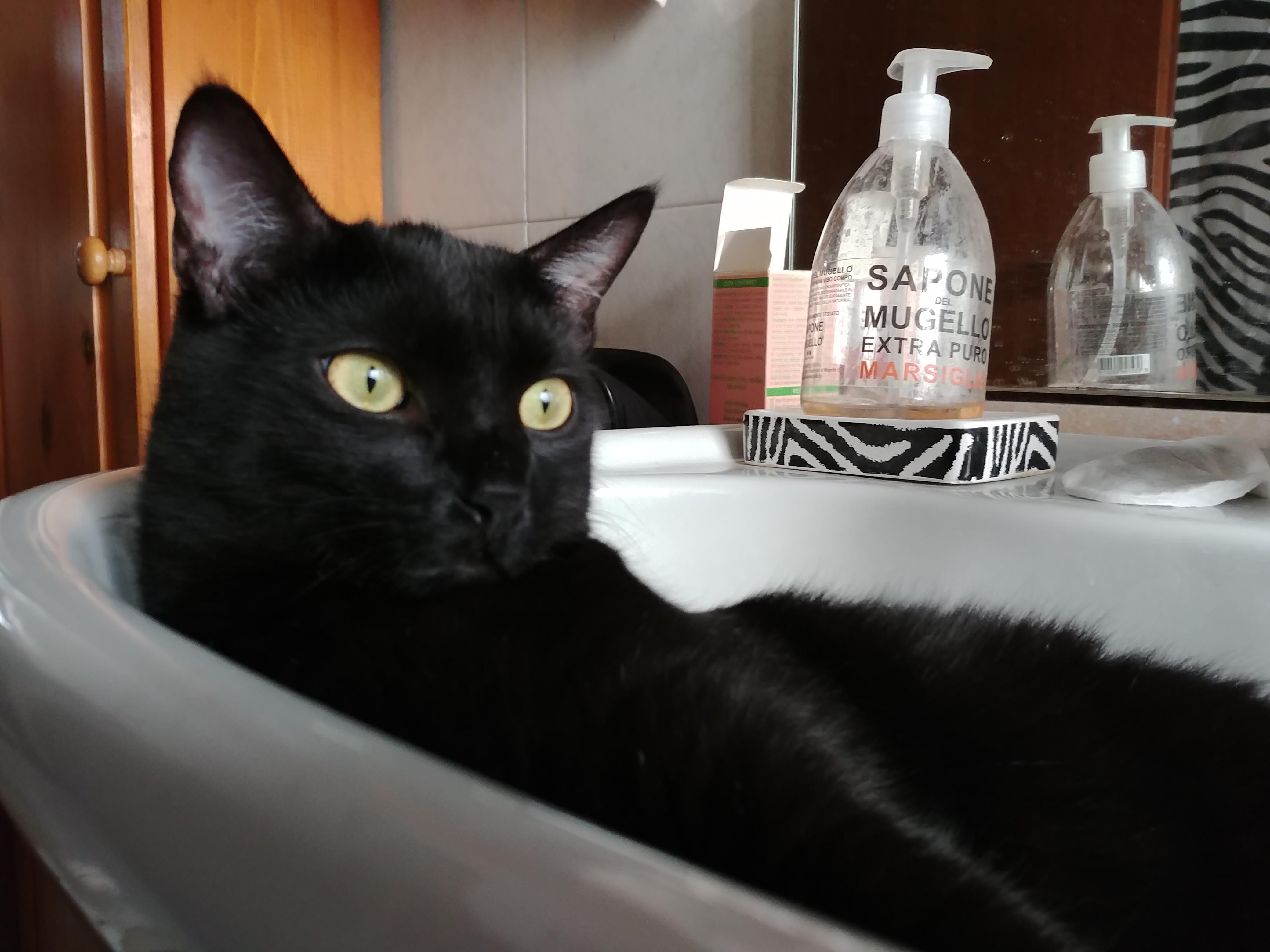 Gatti neri: Trottolo di M. Iovaldi