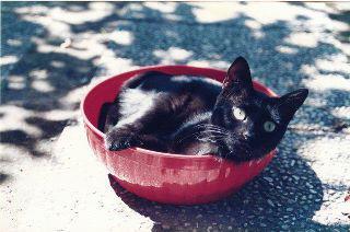 gatti neri, Il Nano