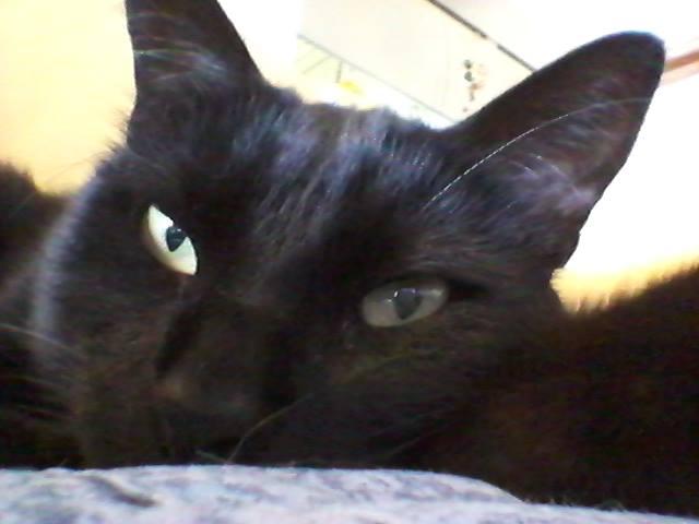 Gatti neri: TEO