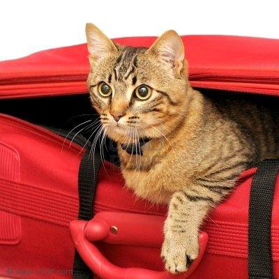 gatti e valigie, 2