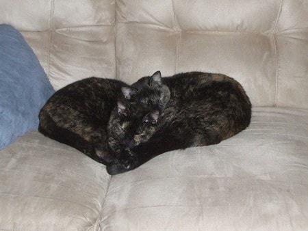 Gatti e cuori 19