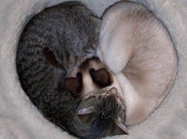 Gatti e cuori 24