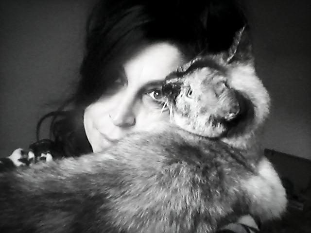 """Gatti affettuosi: due minuti di """"puro amore"""" micioso!  (video)"""