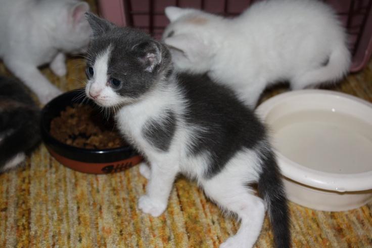 Gatti e cuori 21
