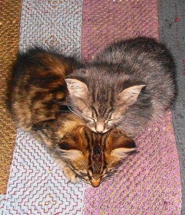 Gatti e cuori 3