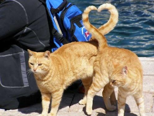 Gatti e cuori 6