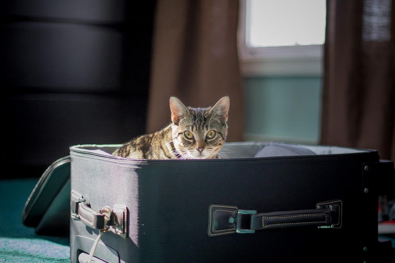 gatti e valigie, 1
