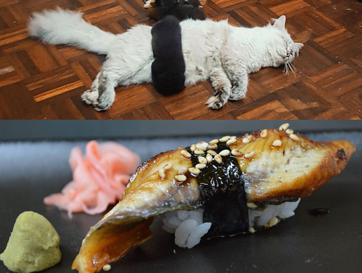 gatti appetitosi