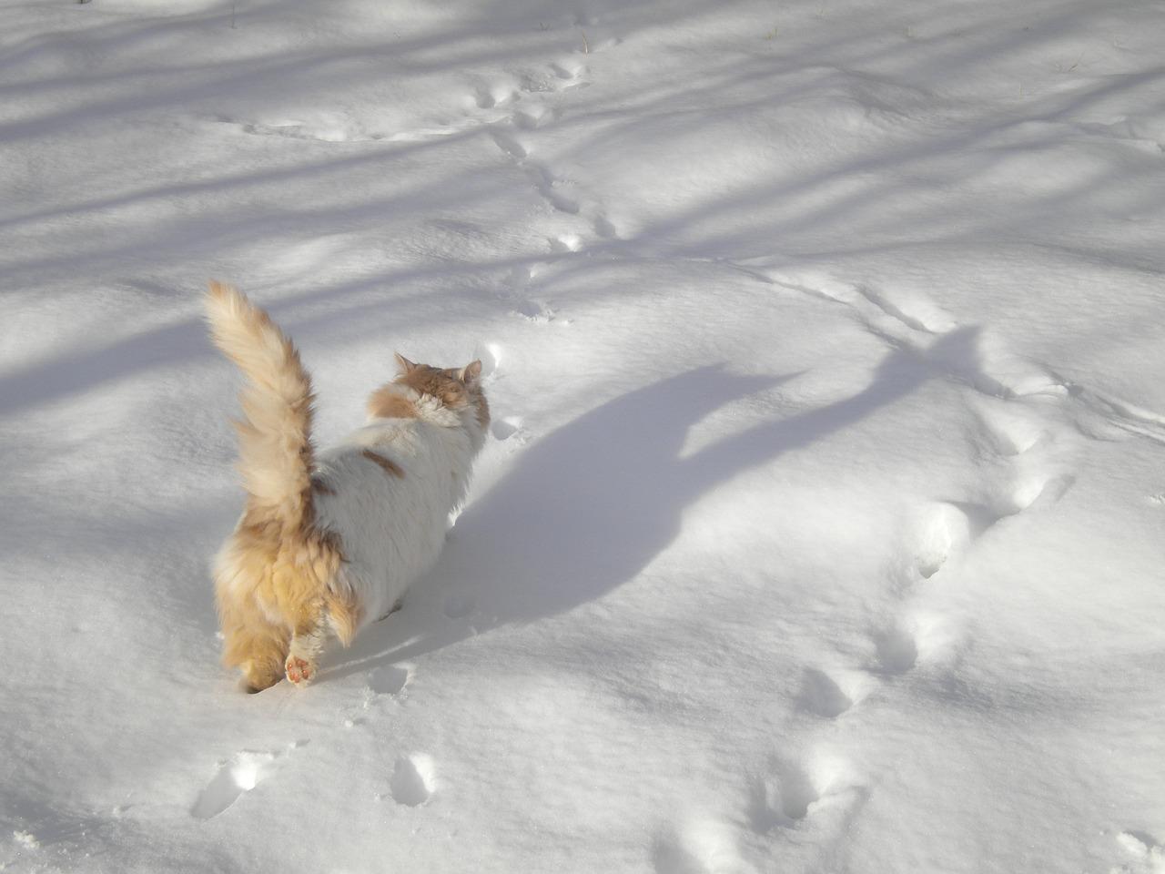 gatti e neve