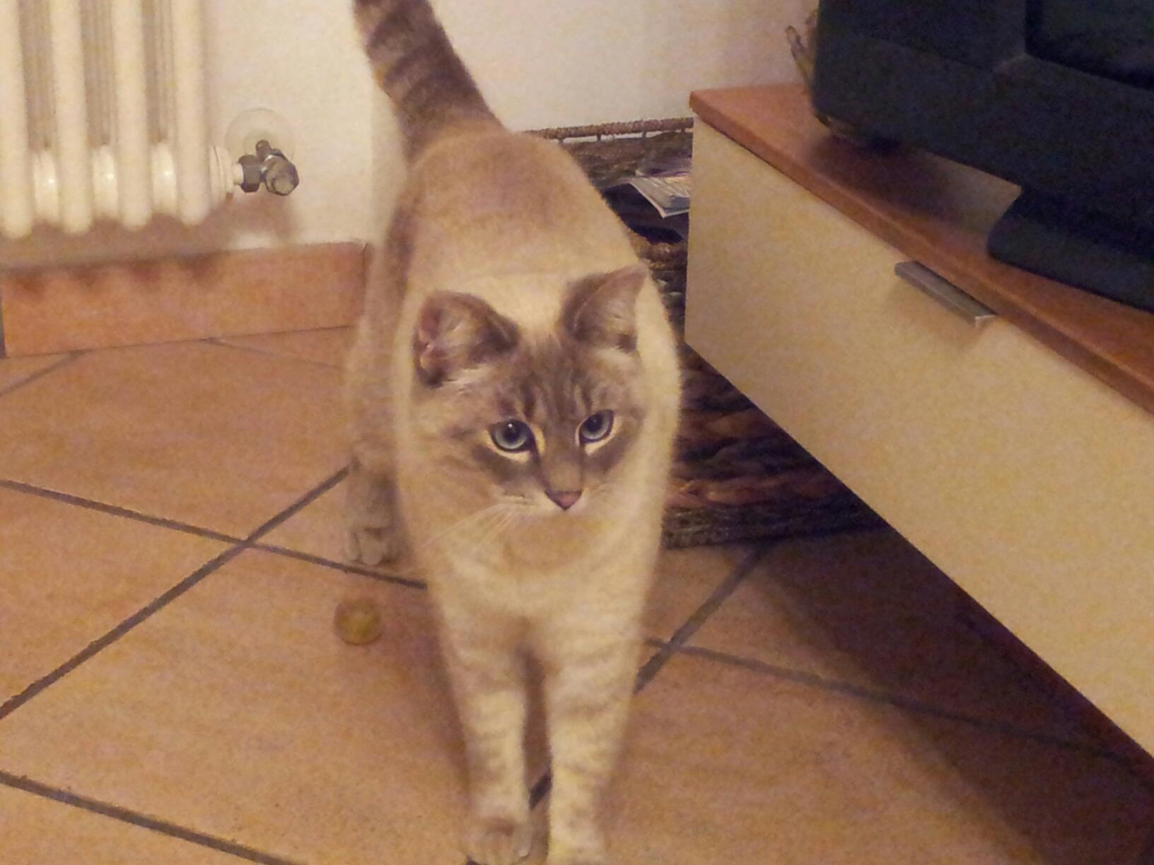 Storia di Theo, il gatto che mi ha insegnato l'amore per gli animali…. Racconto di Marco B.