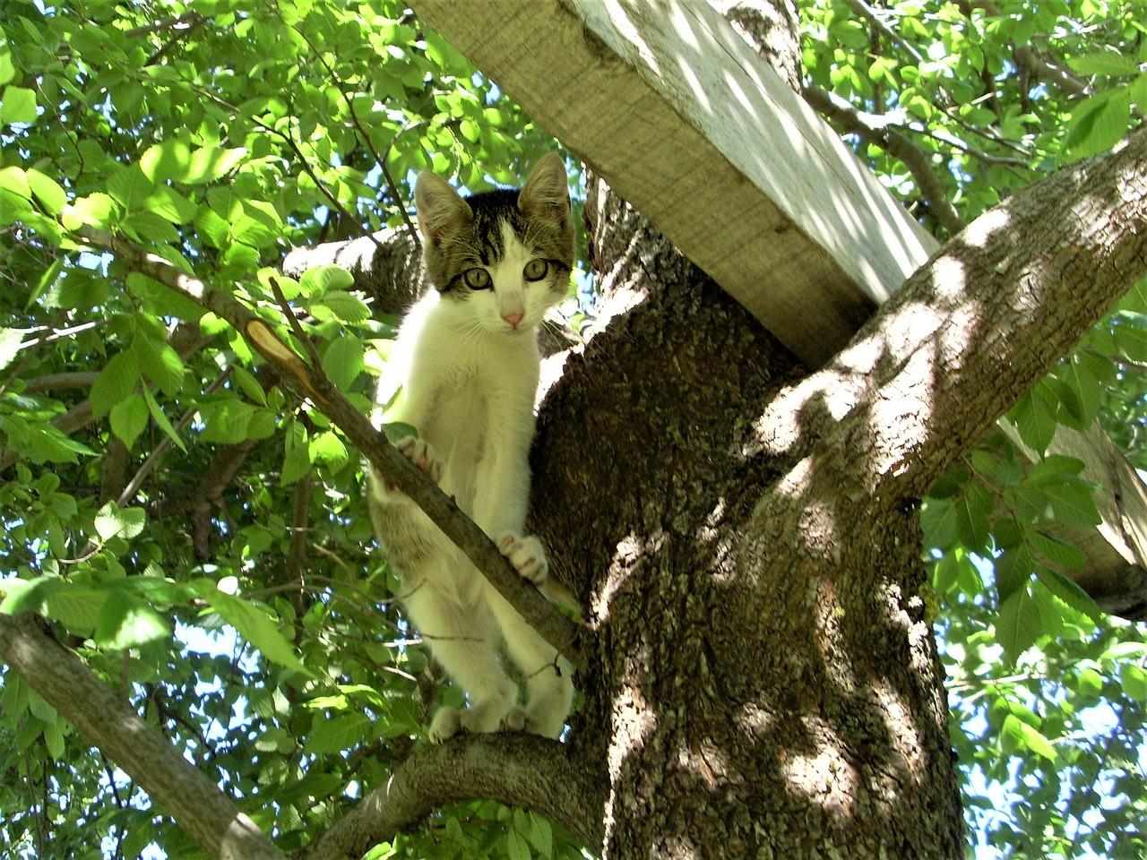 gatto bloccato sull'albero
