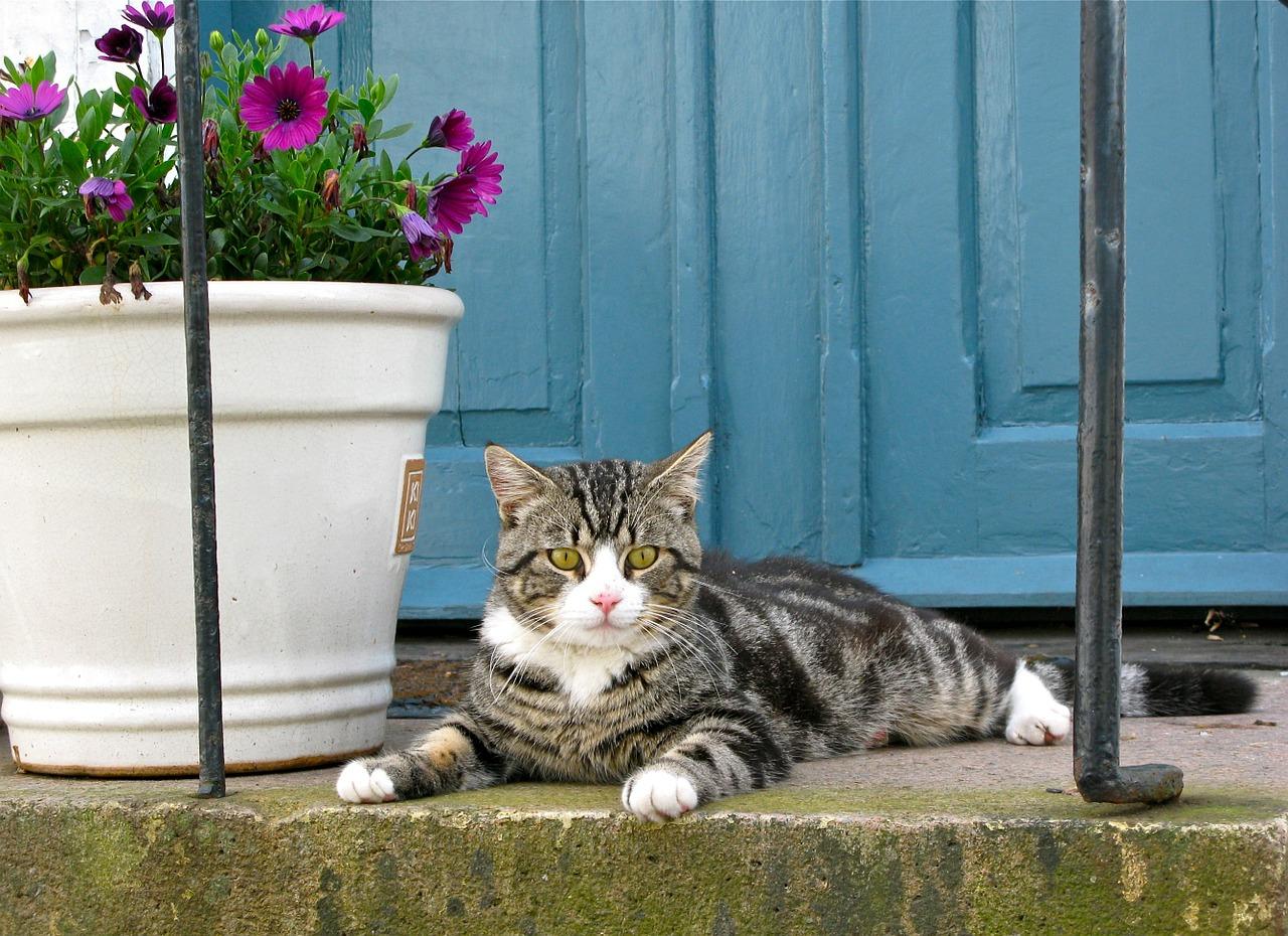 Comportamento del gatto: scopriamo qualche curiosità ...