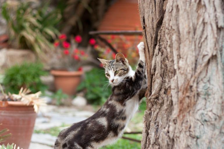 Comportamento nel gatto, il gatto si fa le unghie solo per affilare gli artigli?