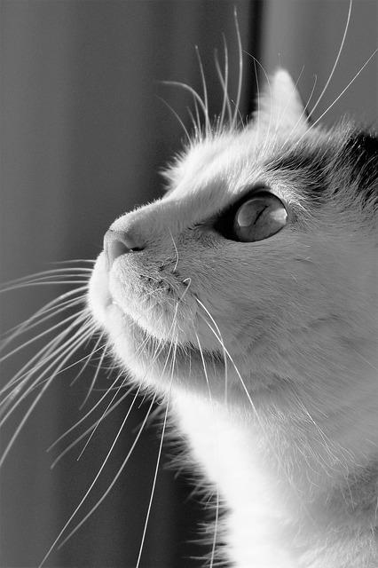 Pallino, il gatto che ha salvato i suoi umani dalla strage di Viareggio