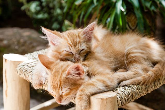 Due gatti sono meglio di uno