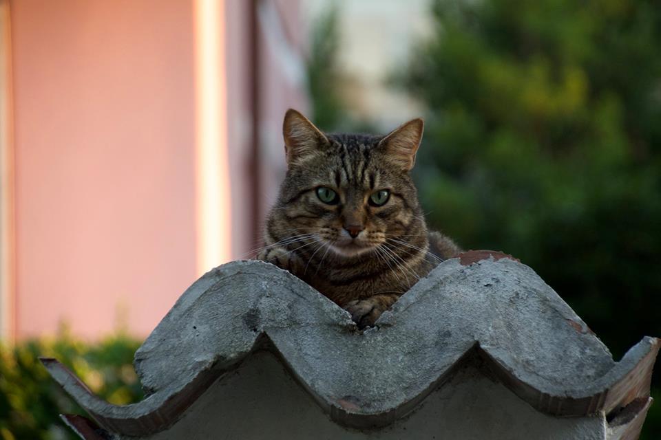 Il Gatto, poesia di Marina Marini Danzi