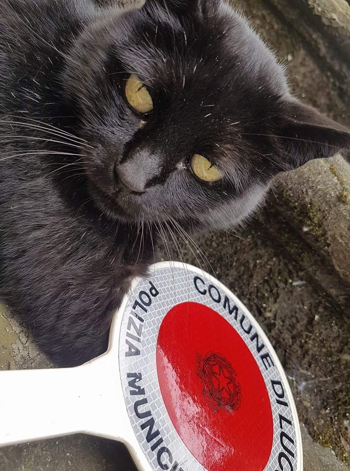 Intervista a Ruffy il gatto vigile di Lucca!