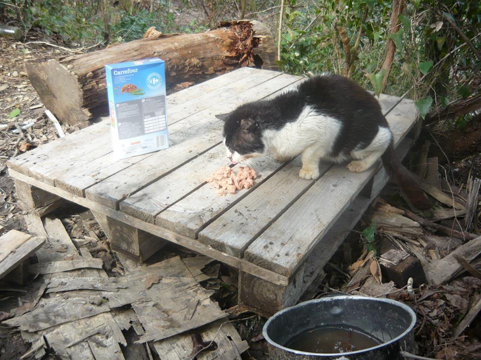 Brutus, il gatto di Bocca di Magra