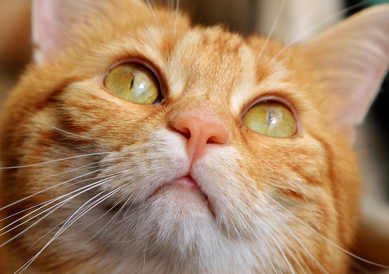 """""""Il gatto"""" poesia di Charles Baudelaire"""