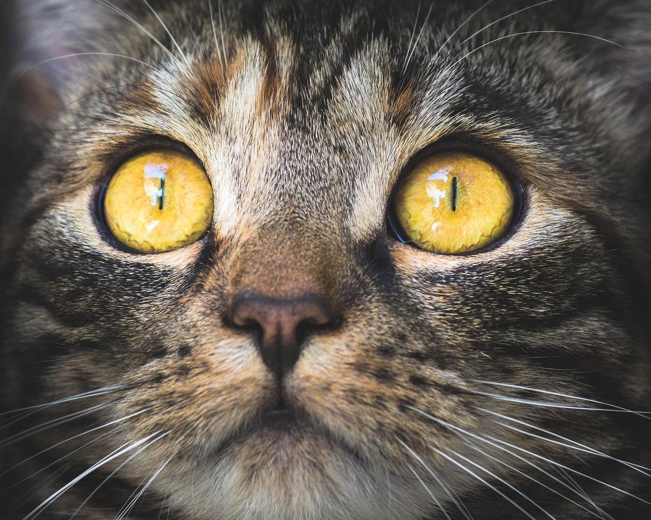 Il gatto poesia di Charles Baudelaire