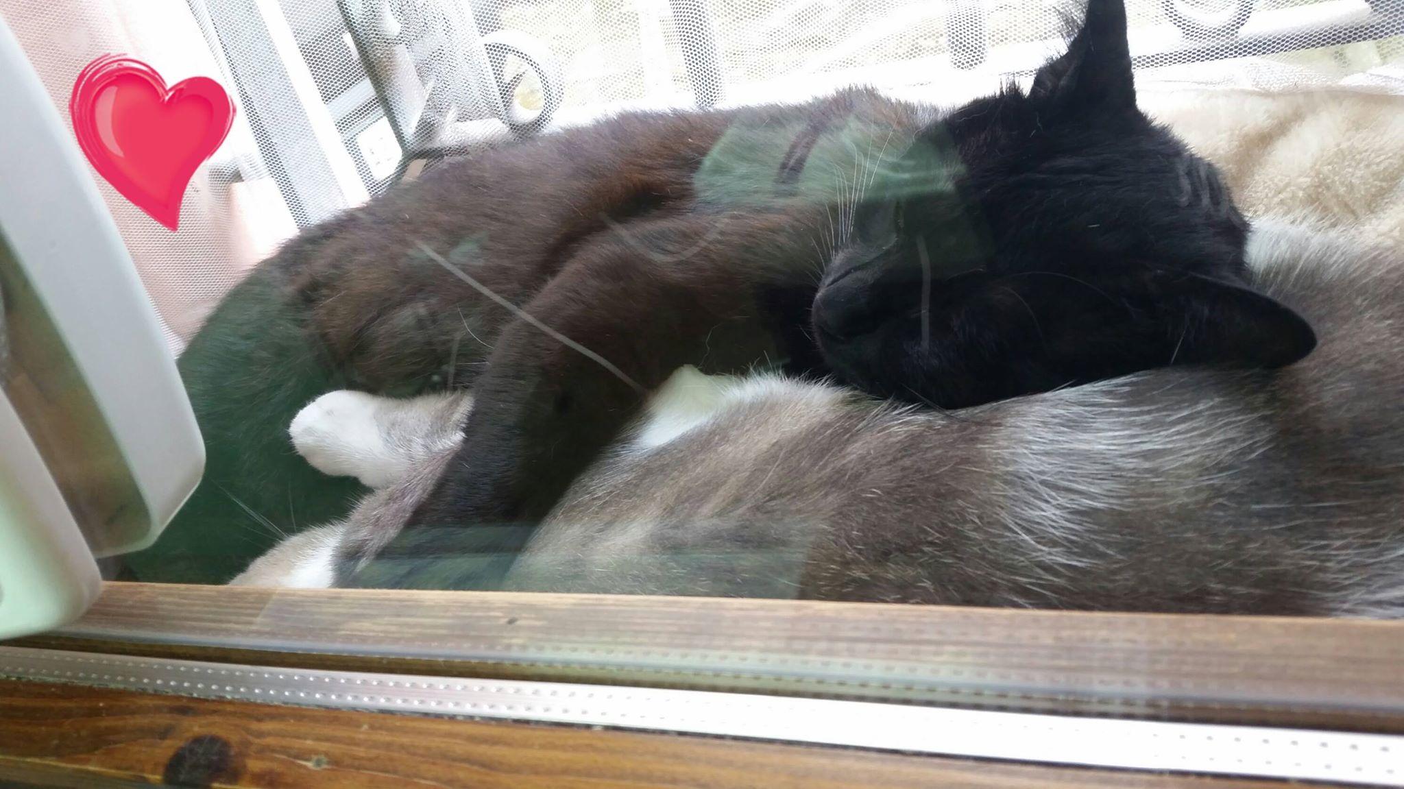 Ciuffi gatto parrucchiere, dorme con L'amico Miciotto