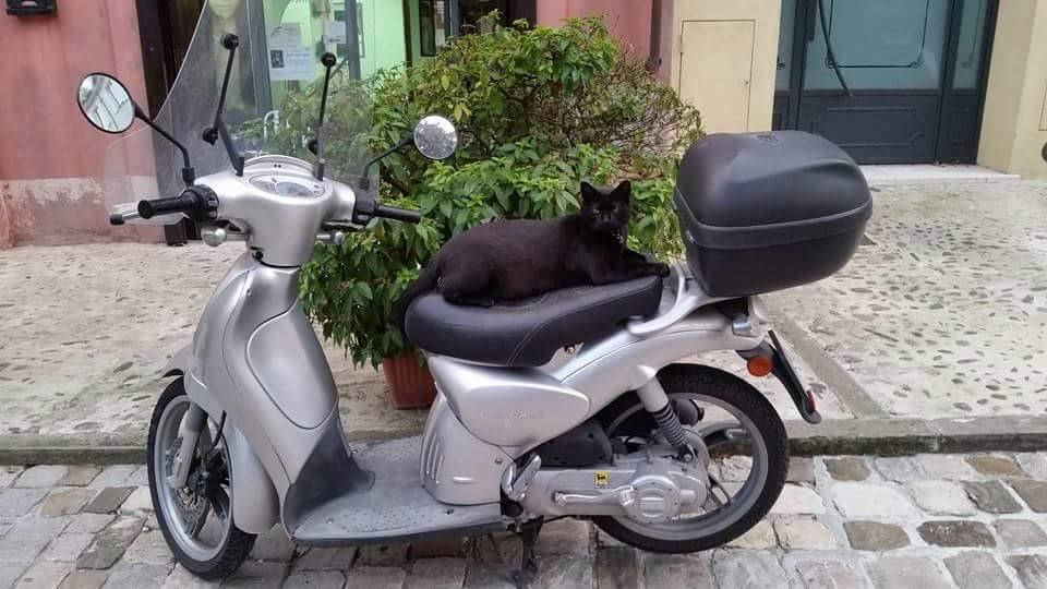 Ciuffi gatto parrucchiere fuori dal negozio gatto