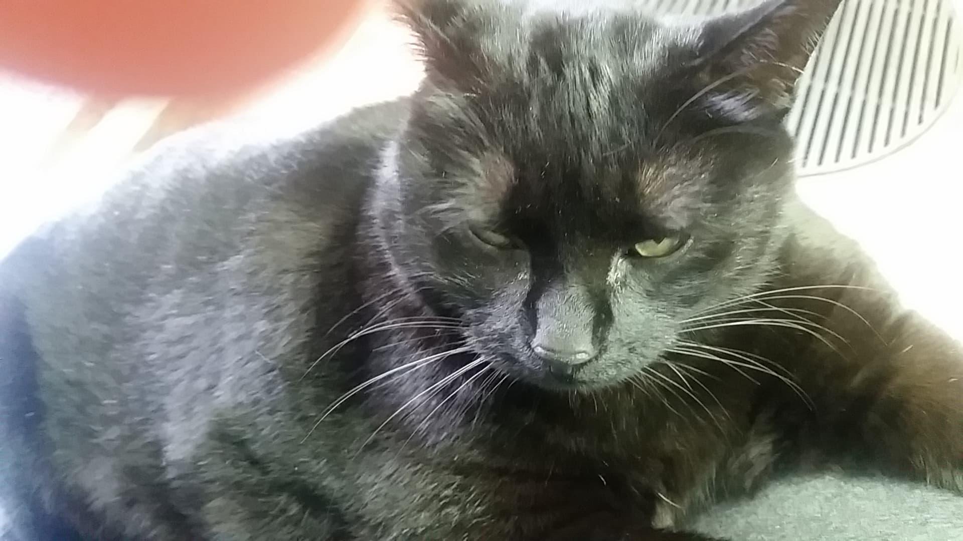 Ciuffi gatto parrucchiere