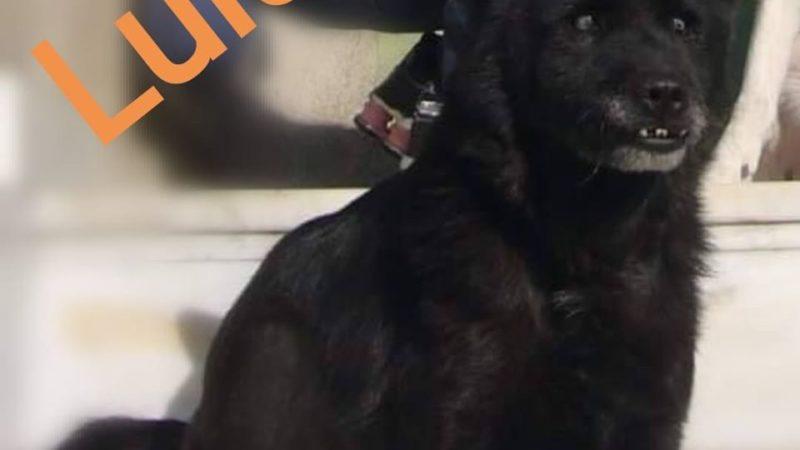 Lulù, storia di una piccola cagnolina dall'anima vagabonda