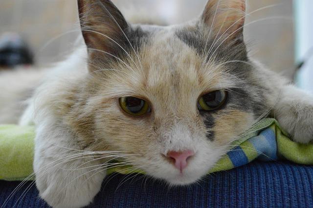 Incidenti gatti e primo soccorso