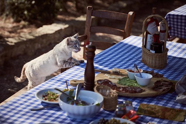 Cibi tossici per i gatti, gatto che salta su tavola imbandita