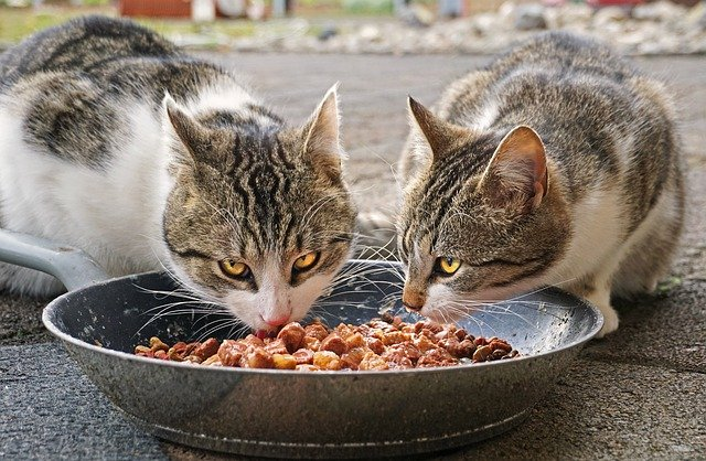 Alimentazione del gatto, cibo umido