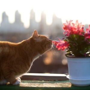 Piante tossiche per i gatti: quali sono e che problemi possono dare
