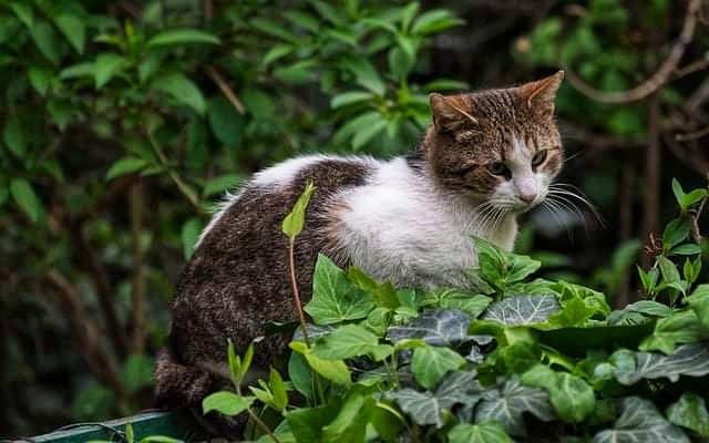 Piante velenose per i gatti e sintomi che provocano